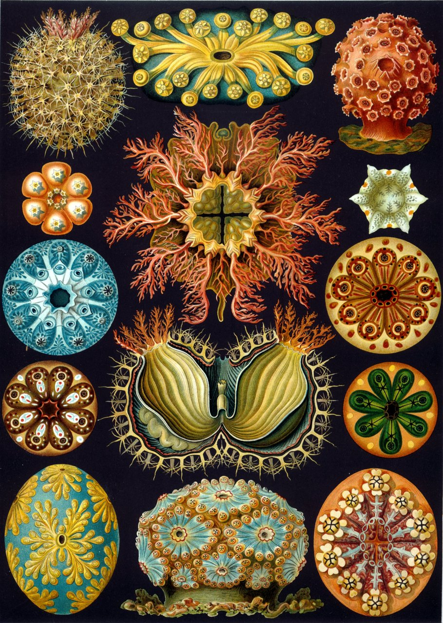 http://www.mimifroufrou.com/sapidsalamander/images/Ernst_Haeckel.jpg