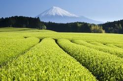 Chi Tea Organic Green Tea Liquid Extract: Antioxidants Boost & Cooling Help {Eat for Beauty}