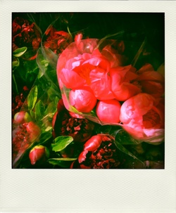 Spring & Summer Notes: Peonies Red, Pink and Yellow {Scented Images of the Day}