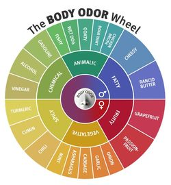 Smells of Feminine & Masculine Sweats Analyzed: Discover the B.O. Wheel {Fragrant Reading}