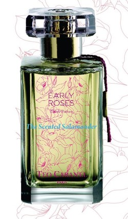 Teo Cabanel Early Roses (2010): Morning Roses {New Perfume} {Rose Notebook}