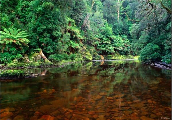 tarkine_rainforest.jpg