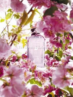 Jo Malone Plum Blossom Cologne (2012} {New Perfume}