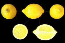 Olfactory Observation #6: Chypré Lemon {Scented Thoughts}