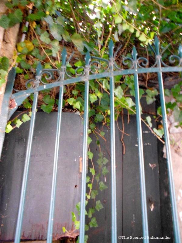 Lierre_Bois_Paris_Nature_blog.jpg