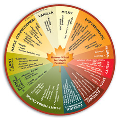 Grasping for Words? Check out the Agri-Food Canada Maple Syrup Flavour Wheel {Fragrant Recipes & Taste Notes}