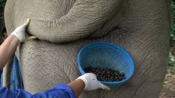 A New Flavor is Born: Black Ivory Coffee aka Elephant Dung Coffee {Fragrant Recipes & Taste Notes}