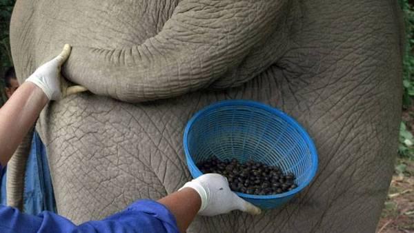 elephant_coffee.jpg