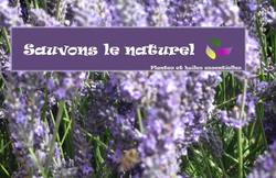 When Lavender Becomes a Toxic Chemical {The 5th Sense in the News}