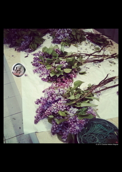 Scented Quote of the Day, from Colette - On Lilacs {Paris Photo}: