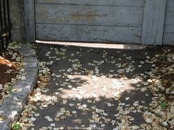 Scented Image: Summer Floral Asphalt