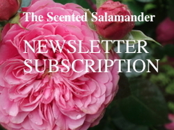 Newsletter Subscription to The Scented Salamander