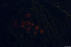 Green, Black & Red - Flowers in the Dark {Paris Photo}