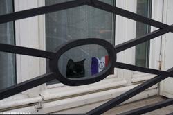 The Cat & the Peace-for-Paris Sign - Le chat noir et le signe Peace for Paris - 130 Street Photographs after the Paris Attacks {Paris Street Photo}