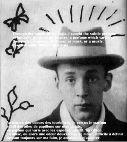 Scented Quote of the Day, From Nabokov ≈ On the Scent of Butterflies