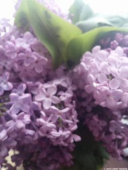 Lilac Bathed in White-Musk Light {Perfume Eye Candy}