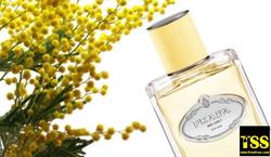 Prada Les Infusions de Prada Mimosa (2016) {New Perfume}