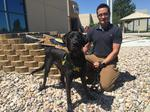 Labradors are Trained to Sniff out Porn Addiction