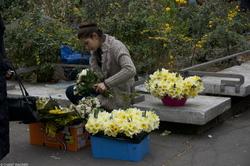 Daffodil Seller // Une vendeuse de jonquilles {Paris Street Photography}