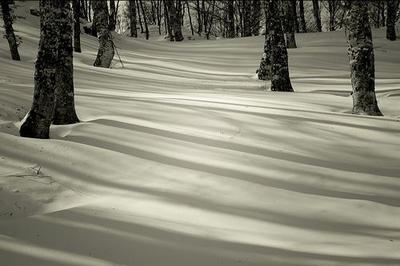 silk_forest.jpg