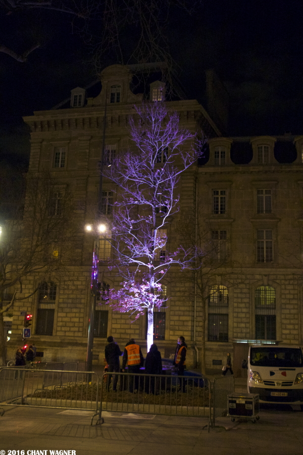 Arbre_de_la_Republique.jpg