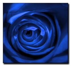 Blue-roses.jpg