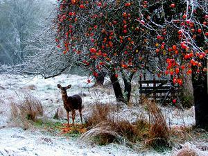 Deer_Orchard.jpg
