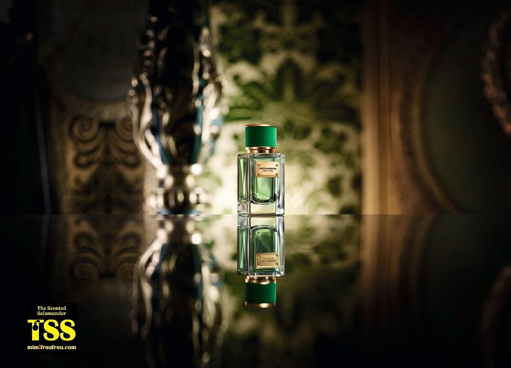 Dolce-Gabbana-velvet-cypress.jpg