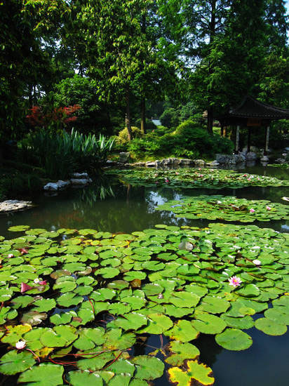 Hangzhou_Botanical_Garden.jpg