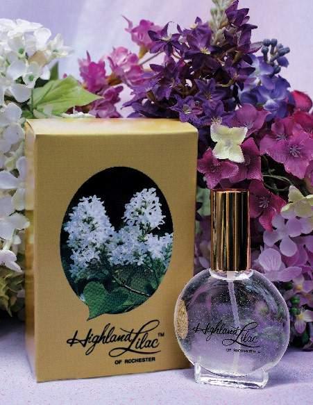 highland lilac