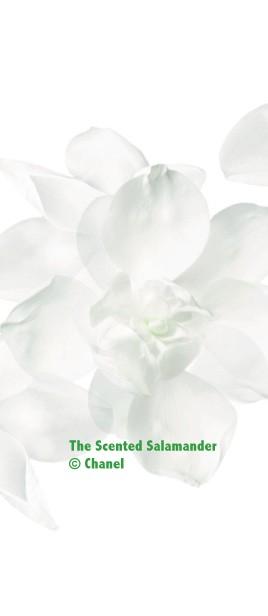 Magnolia-Chanel-B.jpg