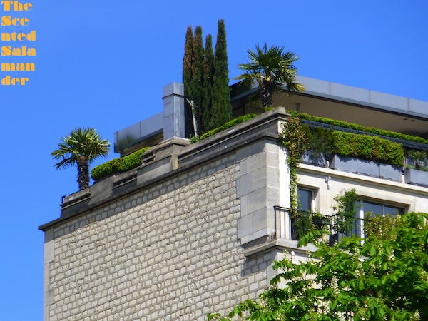 Palmiers_immeuble_Paris.jpg