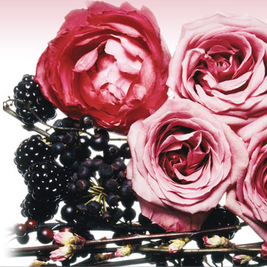 RoseEssentielle_Roses.png