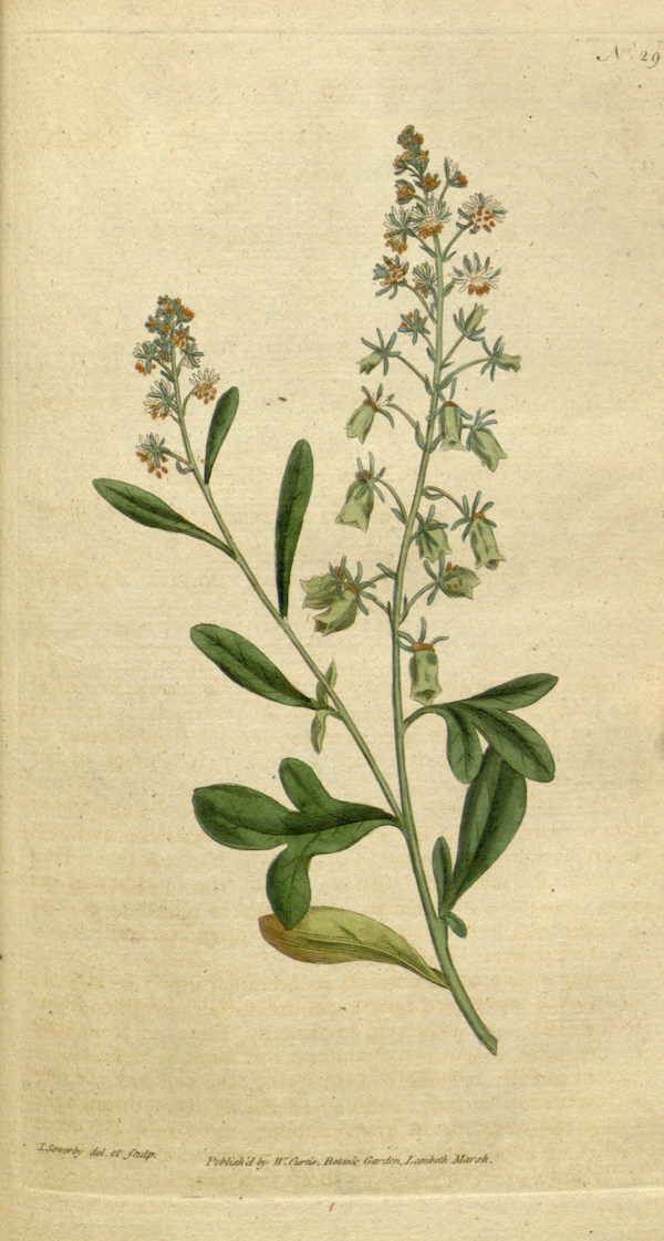 The_Botanical_Magazine,_Plate_29_(Volume_1,_1787).png