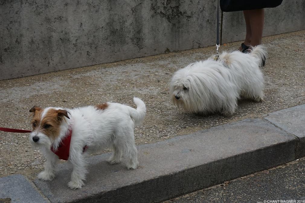 Two_Doggies_II.jpg