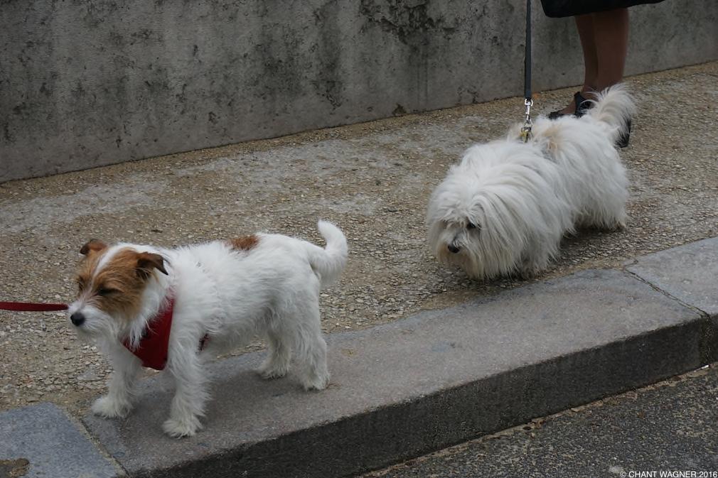 Two_Doggies_III.jpg