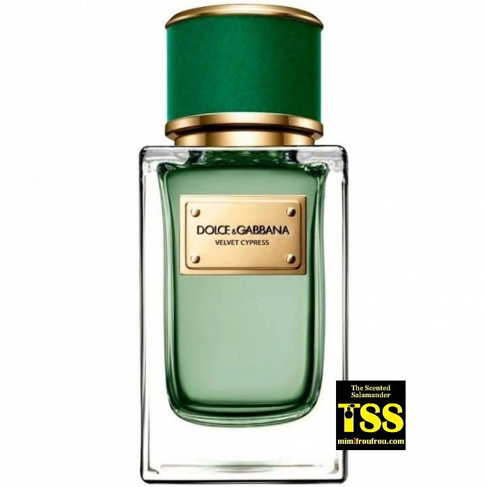 dolce-gabbana-velvet-cypress-bottle.jpg