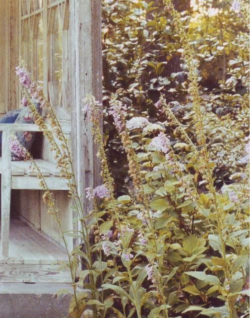 dries_van_noten_garden_lier.jpg