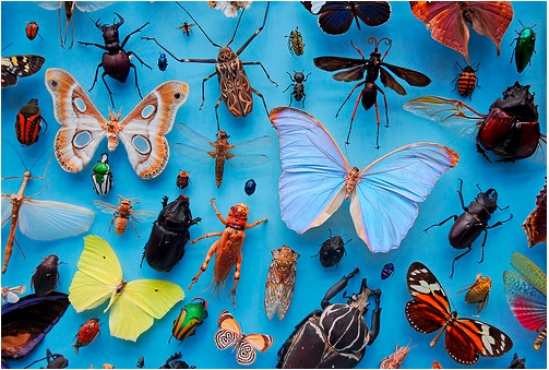 insects-oxford-university.jpg