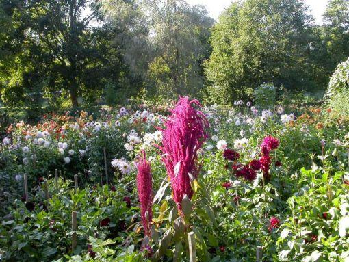 jardin_du_parfumeur_mezilles.jpg