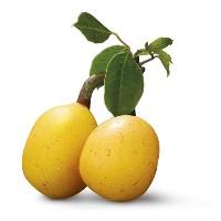 marula-fruit-A.jpg