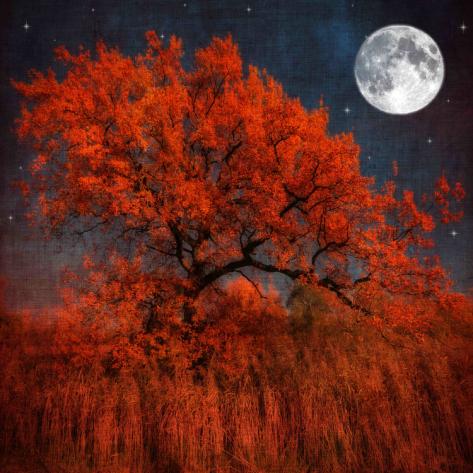 philippe-sainte-laudy-halloween-color_i-G-67-6752-4CZZ100Z.jpg