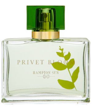privet-bloom.jpg