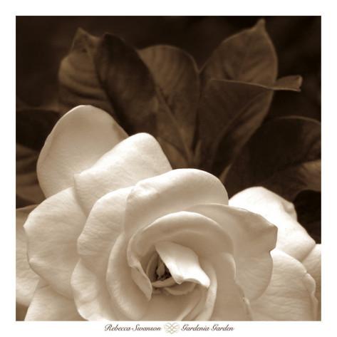 rebecca-swanson-gardenia-garden.jpg