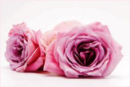 roses_givaudan.jpg