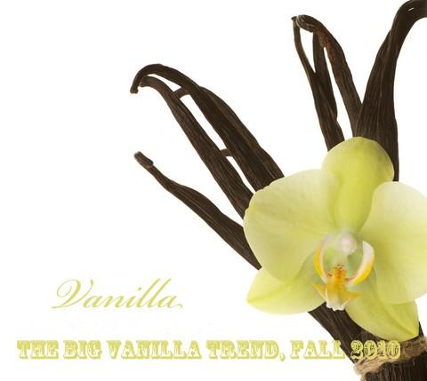 vanilla-bean-orchid-B.jpg